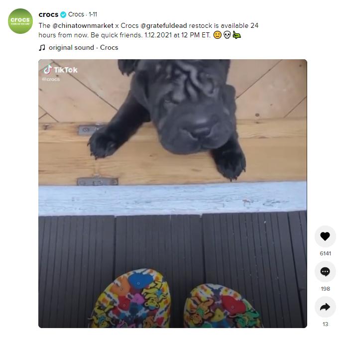croqs puppy video
